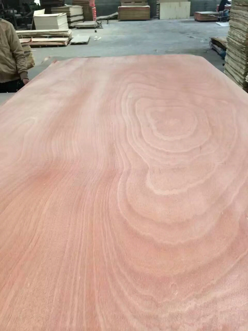 Commercial Plywood with okoume face