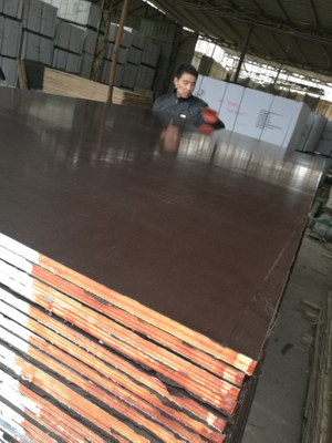 Top Quality Waterproof Plywood for Construction Usages