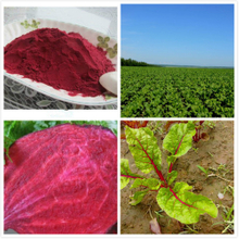 GMP Certified Quality Beet Extract Powder Animal Feed