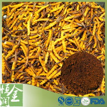 Health Beneficial Cordyceps Sinensis Extract