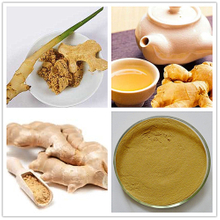 Antibacterial GMP Certified Ginger Root Extract