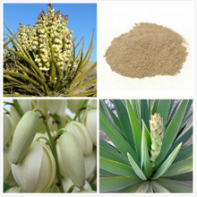 GMP Certified Yucca Schidigera Extract