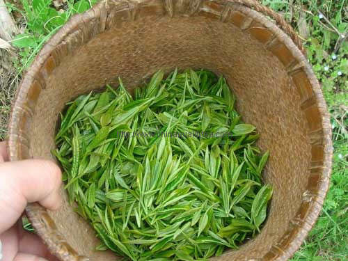 Yong Xi Huo Qing(Quality Gunpowder tea)