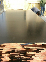 Poplar Core Plyboards Black Film WBP Glue
