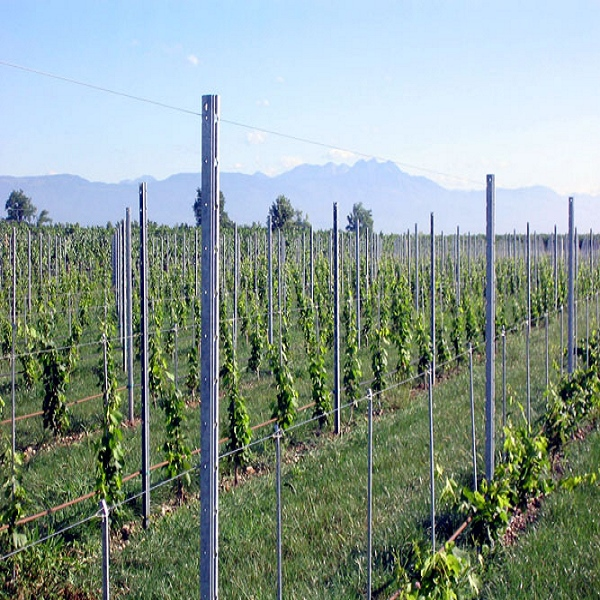 Orchard plantations galvanized steel vineyard post grape