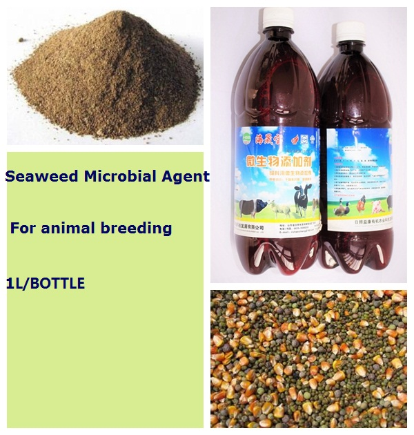 Seaweed Organic Feed Additive for Animal