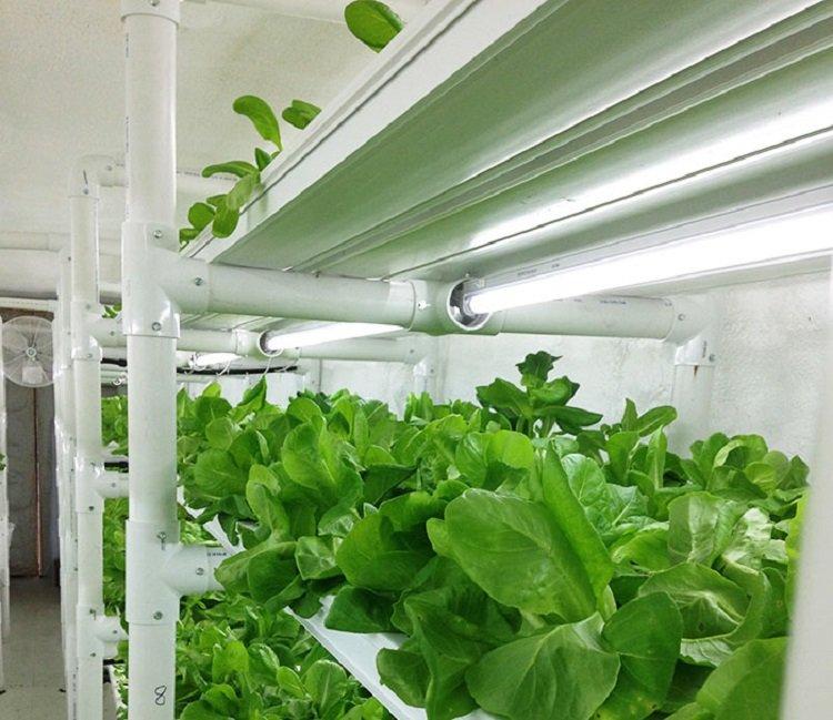Cropbox-growing.jpg