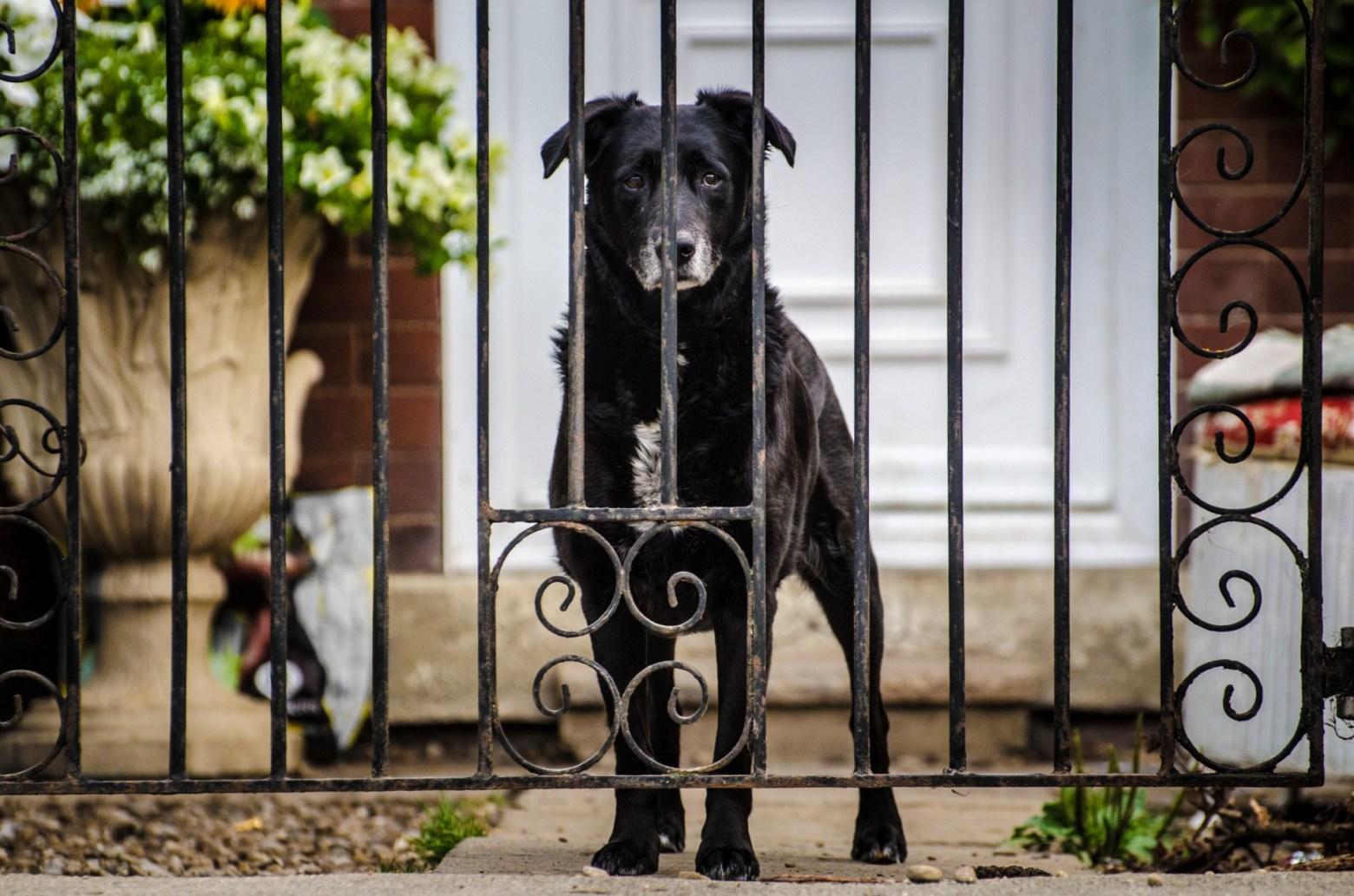 dog-gate.jpg