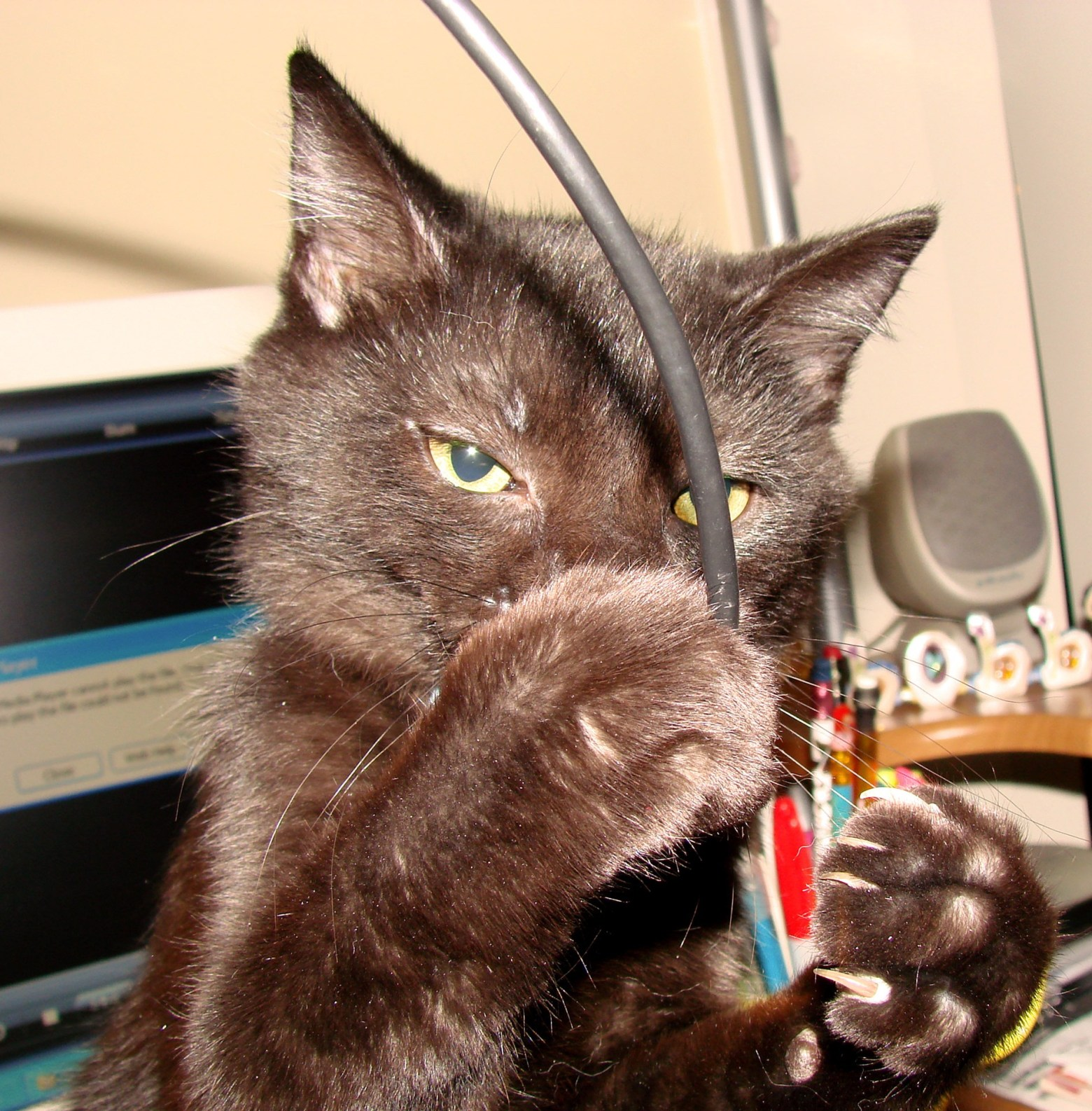 cat-cable.jpg
