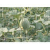 HDPE/PP 10gsm white color planting net/plant support net
