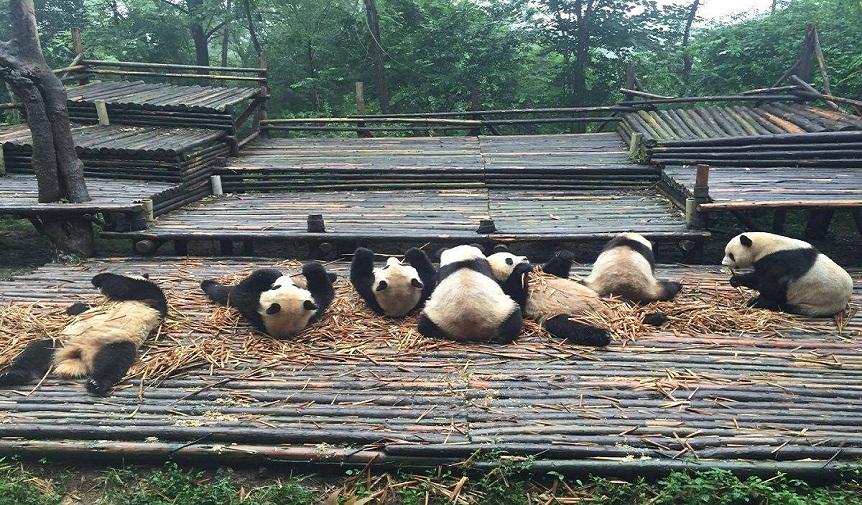 KONE-Panda.jpg