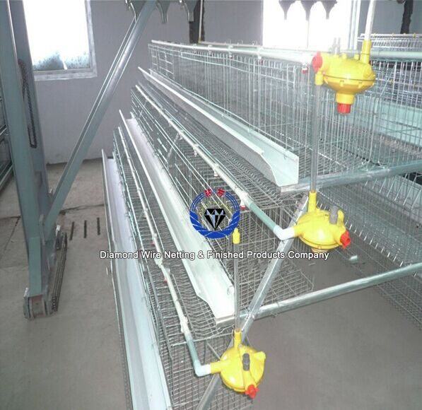 Egg layer chicken cage