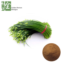 Garlic Chives Seed Extract Jiucai Seed Extract Chinese Chives Extract