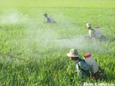 Vietnam pesticides market to reach $1.2 billion by 2022