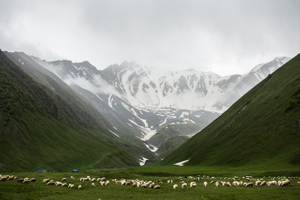 herd-of-animals-on-grass-field-near-mountains-1574843.jpg